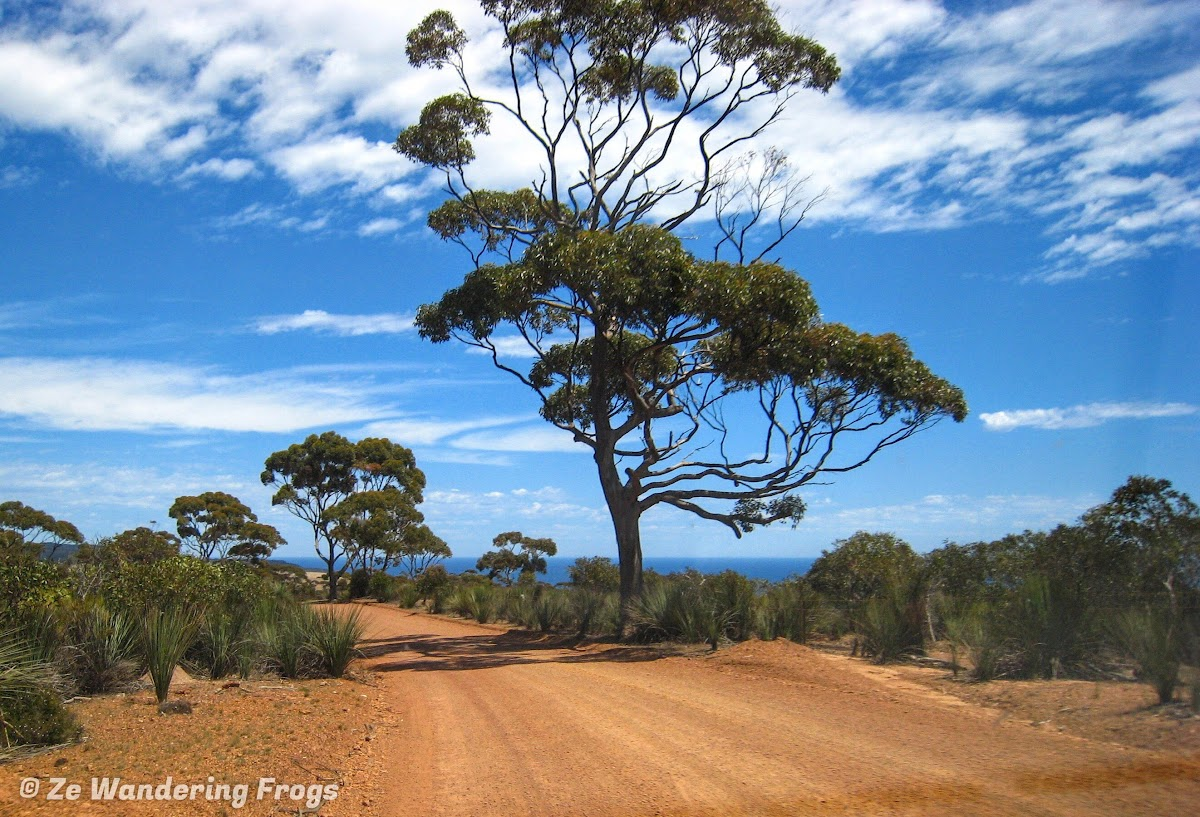 Perfect outback picture on Kangaroo Island