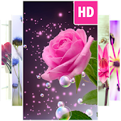 Flower Wallpapers