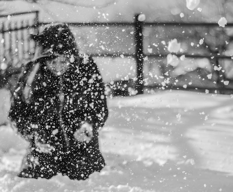 Sotto la neve  di Renata Roattino@jhonninaphoto