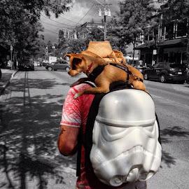 Companion by Ernie Kasper - Instagram & Mobile iPhone ( cowboy, street, city life, street scene, road, highlight, hat, urban, pet, stormtrooper, dog, bnw, langleyfresh, animal )
