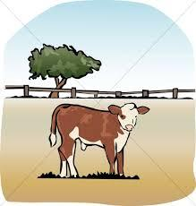 Image result for the fatted calf