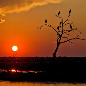 Sunset in Botswana by Giancarlo Bisone - Landscapes Sunsets & Sunrises ( botswana, cranes, sunset, safari, africa )