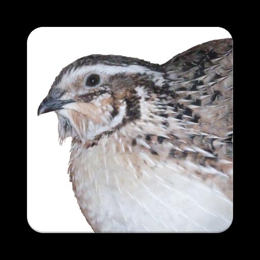 Quail Incubation Hatching Calendar (app)