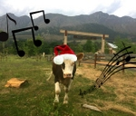 MOO-ry Christmas Event : Farm Sanctuary SA