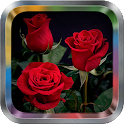 Rose Flower Live Wallpaper Pro