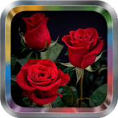 Rose Flower Live Wallpaper Pro