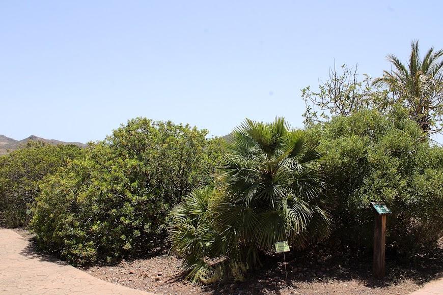 Jardín botánico de Rodalquilar.