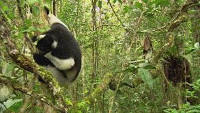 Madagascar thumbnail