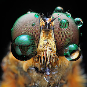 ballon eyes by Shikhei Goh II - Animals Insects & Spiders