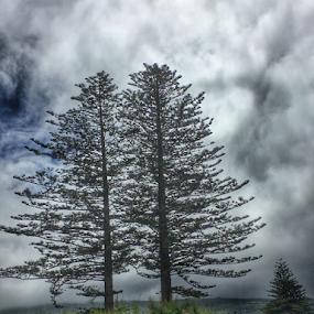 Double tree by Alin Miu - Instagram & Mobile iPhone ( details, nature, tree, fog, isolated tree )