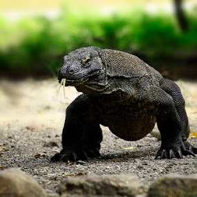 by Jarot Photograph - Animals Reptiles