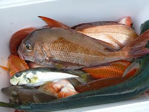 Photo: ヤマグチさんの釣果。 いま一歩でした。次回こそ!