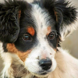 Punťo by Rombe Kasňa - Animals - Dogs Portraits ( face, pet, dog, young, portrait, animal )