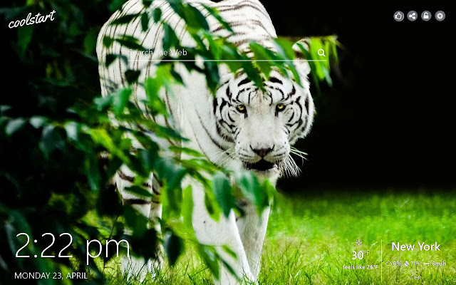 Tigers HD Wallpapers Wild Animals Theme