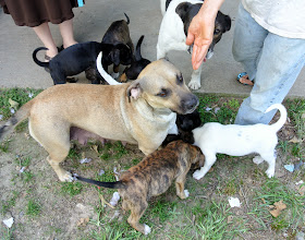 Photo: Mother dog and some of the 11 puppies (there were 20 at first) - two litters.