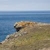 Maritime Sunburst Lichen