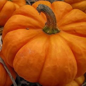 Pumpkin Up close by Jeff Dalton - Food & Drink Fruits & Vegetables ( vegatables, pumpkin, food, fall )