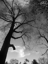 Photo: Black and white photo of a dark tree at Eastwood Park in Dayton, Ohio.