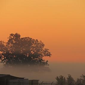 Foggy Tree at Sunrise by Grady  Welch - Landscapes Sunsets & Sunrises ( foggy, sunrise, vibrant, tree, fog )