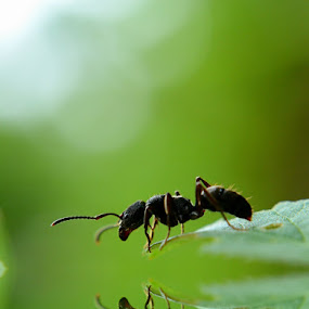 So Lonely by Rizki Mayendra - Animals Insects & Spiders