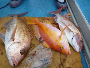 Photo: こちらもトリプル! 真鯛、アカイサキ、真鯛!