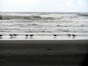 Photo: A gathering of Shore Birds!