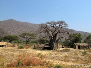 Photo: case tra i baobab