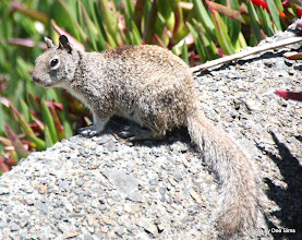 Photo: (Year 2) Day 359 -  Squirrel at Crescent City Campsite #2