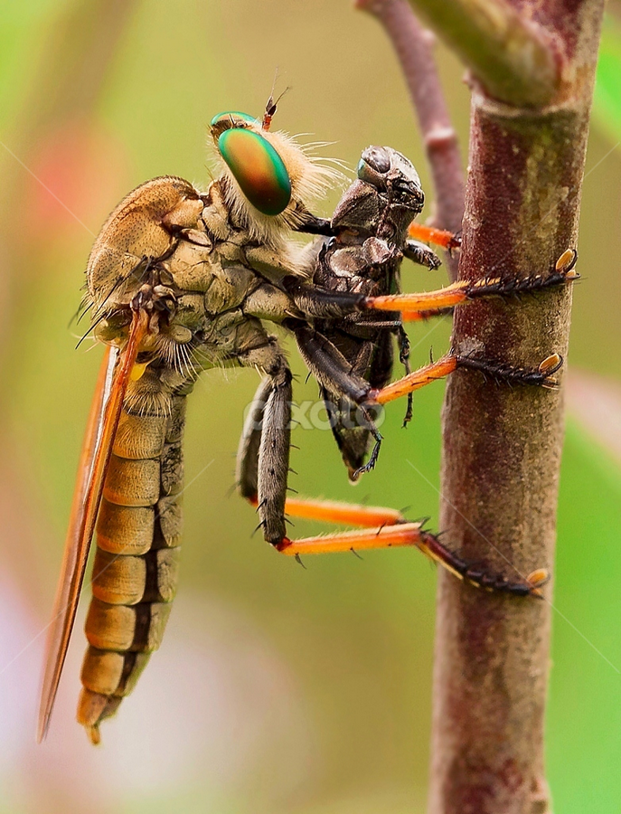 Enjoying... by Vincent Sinaga - Animals Insects & Spiders