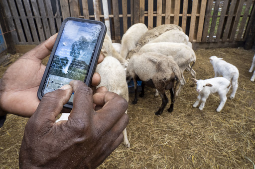 Recapping the Federal Farm and Food Policy Pandemic Response