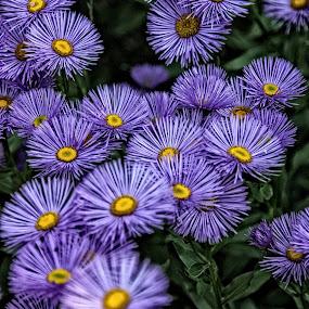 Hoveton hg flower 02 by Michael Moore - Flowers Flower Gardens (  )