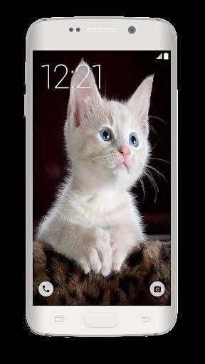可愛的貓動態壁紙熱門