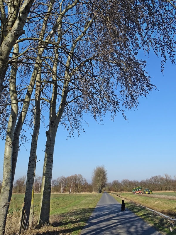 2019-02-18 zw. Lüchow + Wustrow Espen (Populus tremula) + Bongo + Traktor