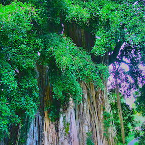 Old Tree by Mohd Khairil Hisham Mohd Ashaari - Nature Up Close Trees & Bushes ( big tree, tree, giant, jungle, forests,  )