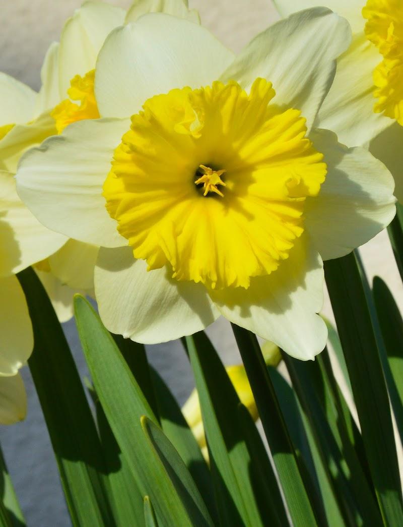Nel mio giardino di Julia982