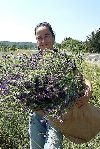 Lucile with a bunch of blueweed