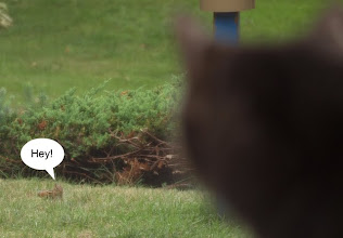 Photo: I was reading a book and Chance was looking out the window, when I heard Veronica yelling in the front yard.
