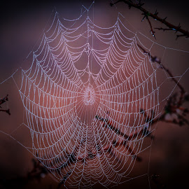 Morning spider webs by Stefan Sorean - Nature Up Close Webs ( drop, macro, green, cobweb, natural, nature, texture, pattern, water, morning, web, background, dew, net, spider )