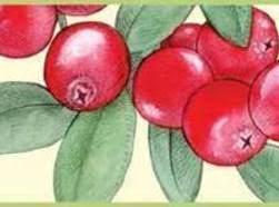 Cranberry Orange Crisp