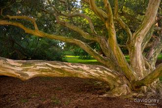 Photo: Botanical Gardens, Melbourne
