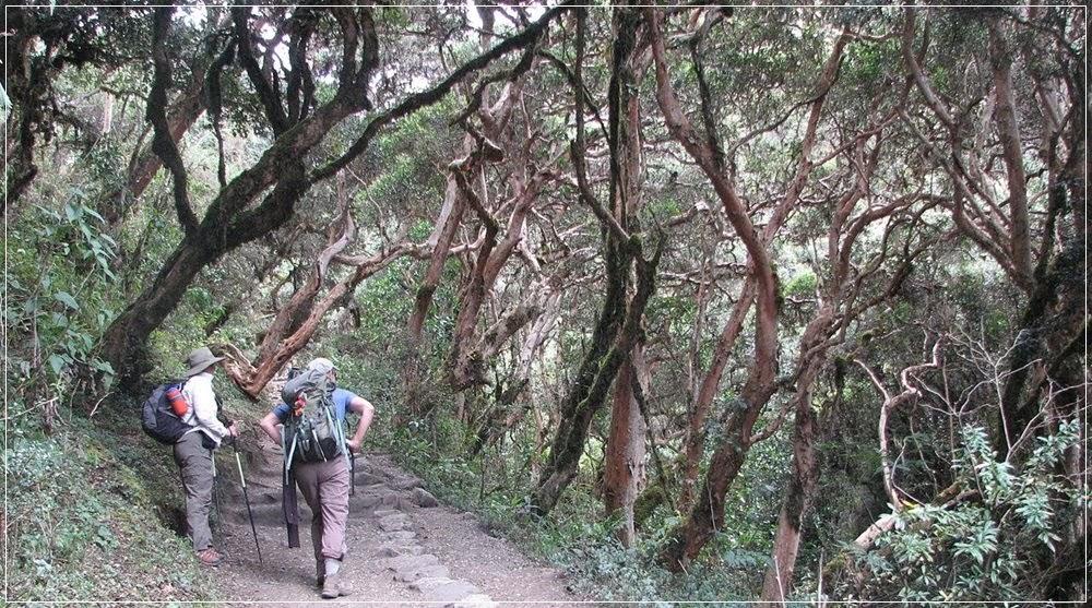 Cruzando floresta na trilha
