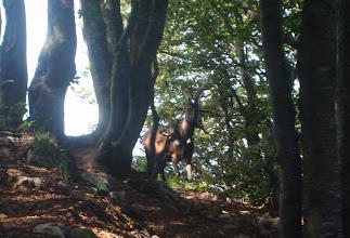 Photo: Bech sul sentiero verso la cima