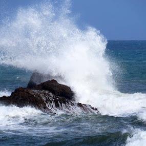 Splash by Karen Noble - Nature Up Close Water (  )