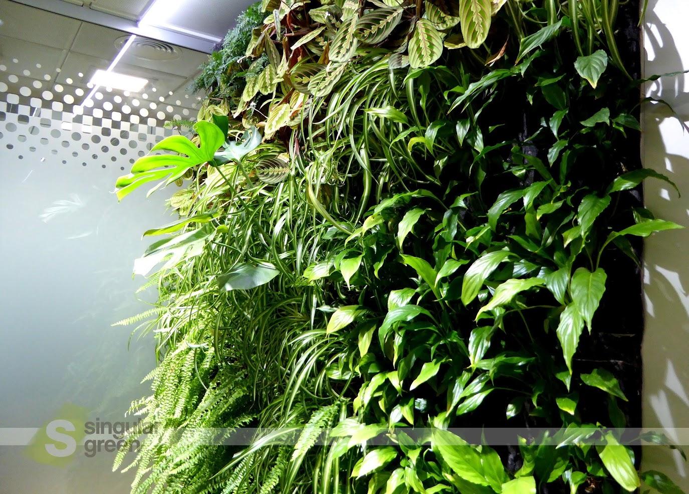 Muros verdes en oficinas