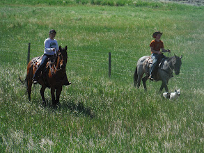 Photo: Day 19 Dubois to Riverton WY 79 miles 1410' climbing: The dog would nip at the hoofs of any cow that wanted to stray