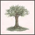 風の棲む木