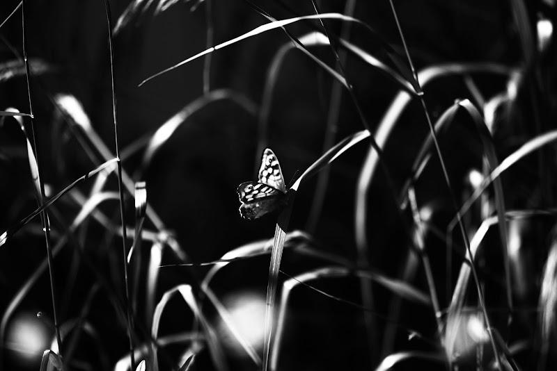 Luce di un mattino di primavera di Giovanna_Tamponi