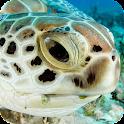 Turtle HD Live Wallpaper icon