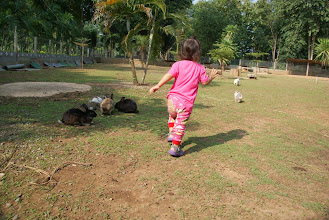 Photo: running after rabbits (a very hash like activity I think)