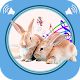 Rabbit and Bunny Sounds Download for PC Windows 10/8/7